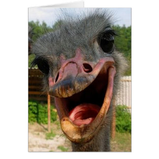 Ostrich What s Up Card