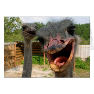 Ostrich What's Up Couple Card