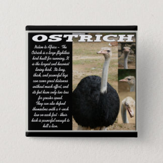 OSTRICH with Description 15 Cm Square Badge