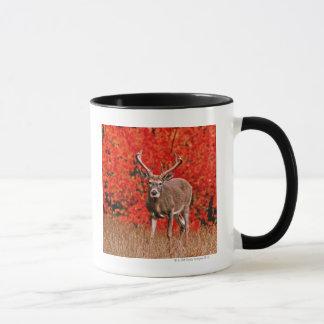 Other common name: Virginia deer. Near Lake Mug