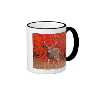 Other common name: Virginia deer. Near Lake Ringer Mug