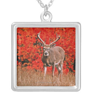 Other common name: Virginia deer. Near Lake Silver Plated Necklace
