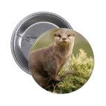 Otter Button