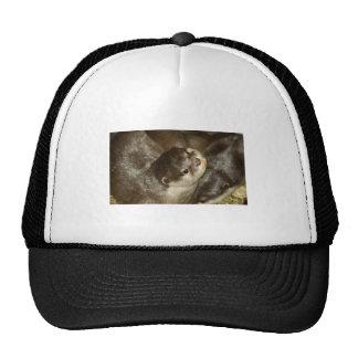 Otter Cap