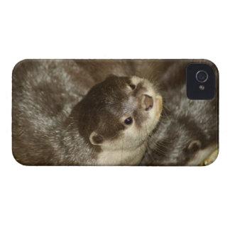 Otter Case-Mate iPhone 4 Case