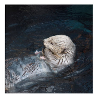 Otter eating water animal nature aquatic wild zoo acrylic print
