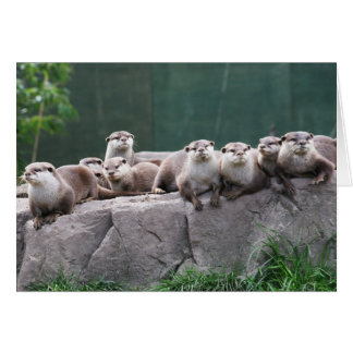 Otter family card