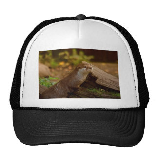 Otter Hats