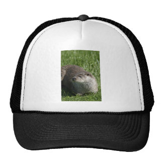 Otter Hat
