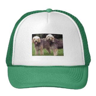 Otter Hound Hat