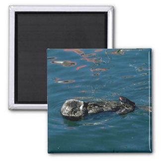 Otter On Back In Water Fridge Magnets