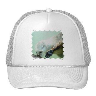 Otter Swimming Baseball Hat