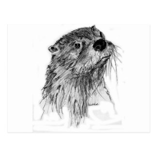 Otter Whiskers Postcard