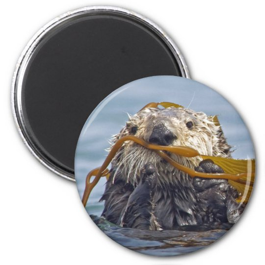 Otter Wrapped in Kelp.Magnet 6 Cm Round Magnet