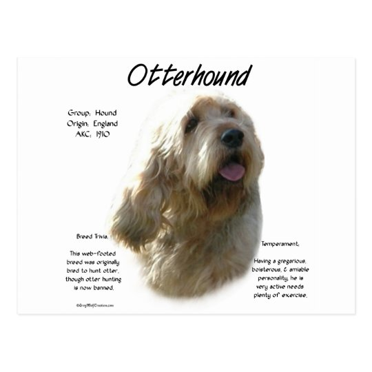 Otterhound History Design Postcard