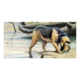 otterhound photo card template