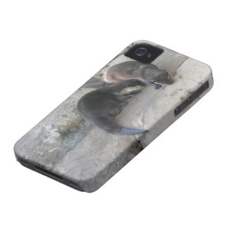 Otters Case-Mate iPhone 4 Cases