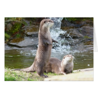 Otters enjoying the sun greeting card