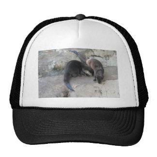 Otters Trucker Hats