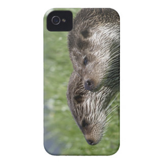 Otters iPhone 4 Case-Mate Barely There iPhone 4 Case-Mate Cases