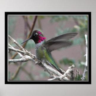 "Our Backyard ""Hemi"" The Hummingbird Poster"