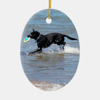 Our Black Labrador Retrieving Frisbee from Lake Christmas Ornament