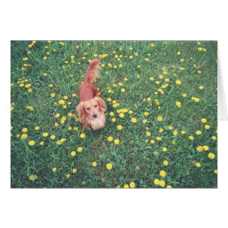 "OUR DACHSHUND-DUBLIN-THE GRASS ""IS"" GREENER ON THE GREETING CARD"
