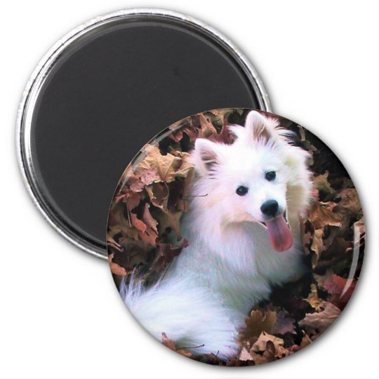 Our Dog Wiess I Photographed! 6 Cm Round Magnet