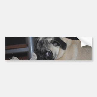 Our little puppy 1 bumper sticker