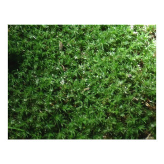 Outdoor Botanical Green Ground Moss Nature Plant Flyer