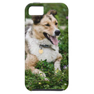 Outdoor portrait of dog lying down in meadow iPhone 5 covers