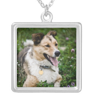 Outdoor portrait of dog lying down in meadow silver plated necklace
