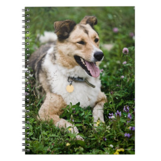 Outdoor portrait of dog lying down in meadow spiral notebook