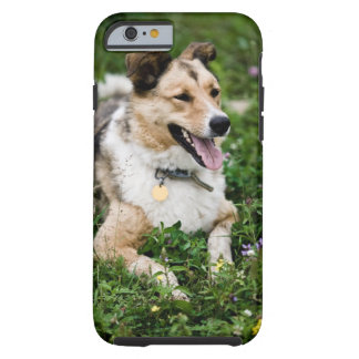 Outdoor portrait of dog lying down in meadow tough iPhone 6 case