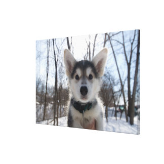 Outdoor portrait of husky dog puppy canvas prints