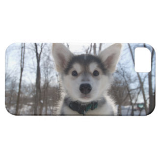 Outdoor portrait of husky dog puppy case for the iPhone 5