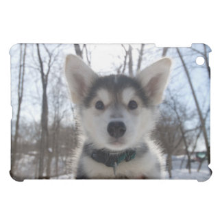Outdoor portrait of husky dog puppy cover for the iPad mini