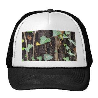 Outdoor Tree Bark With Green Ivy Cap