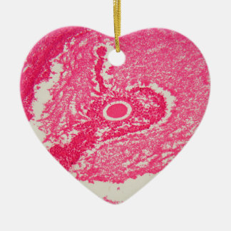 Ovary cells under the microscope. ceramic heart decoration