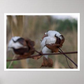overcast cotton poster