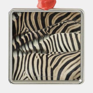 Overhead view of Burchell's Zebra Silver-Colored Square Decoration