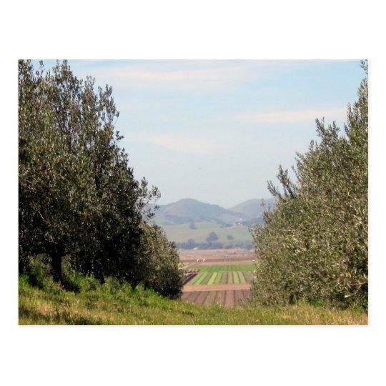Overlooking San Juan Valley Postcard