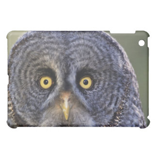 Owl 3 iPad mini case