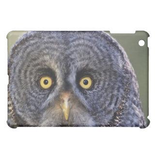 Owl 3 iPad mini case