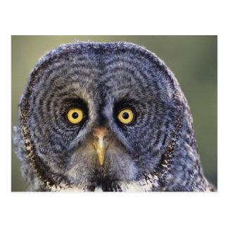 Owl 3 postcard