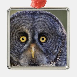 Owl 3 Silver-Colored square decoration