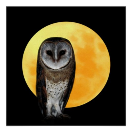 Owl and the full moon posters