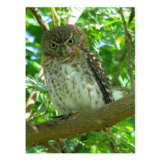 Owl bird animal branch nature tree postcard