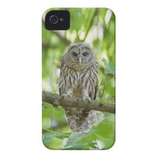 owl   Bird Tree green add text iPhone 4 Case