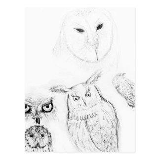 Owl Black and White Drawing Montage Postcard